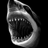master sharky